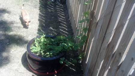 Are Raised Garden Beds Better Than Container Gardening?