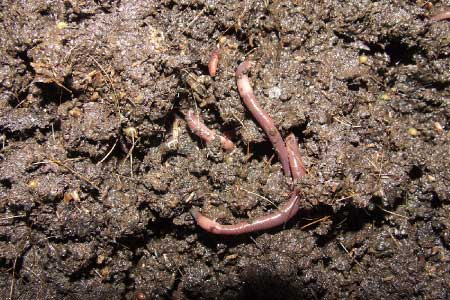 What is the deal with Worm Composting?