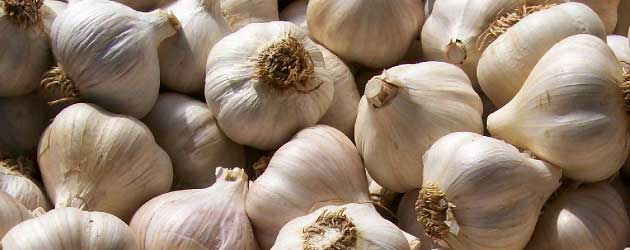 profitable plants garlic 63 Profitable Plants for Small Scale Farming: Garlic