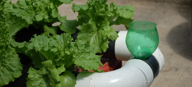 Homemade Hydroponics Drip Irrigation System