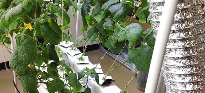 Hydroponics: How to Save Water